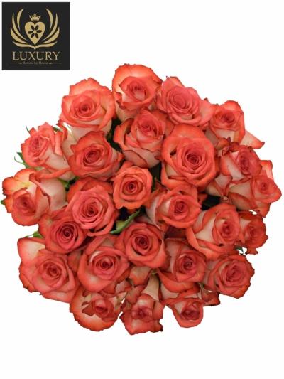 Kytice 25 luxusních růží BLUSH 70cm