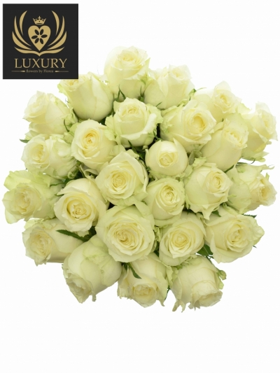Kytice 25 luxusních růží QUEEN OF AFRICA XL 50cm