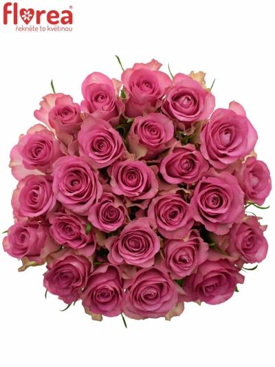 Kytice 25 růžových růží ROYAL JEWEL 60cm