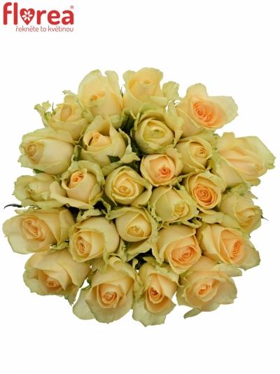 Kytice 25 meruňkových růží MAGIC AVALANCHE 60cm