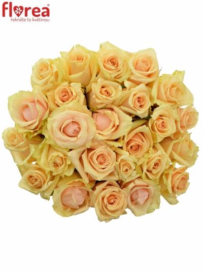 Kytice 25 meruňkových růží PRIMA DONNA