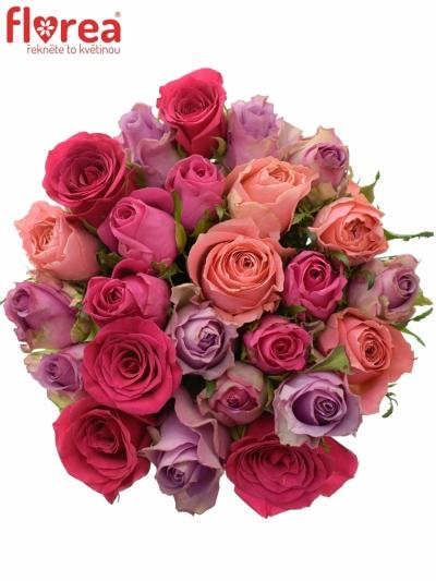 Kytice 25 míchaných růží ABERA 40cm