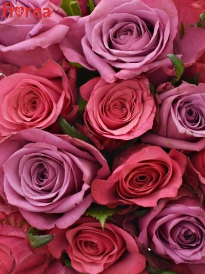 Kytice 25 míchaných růží BENAYA