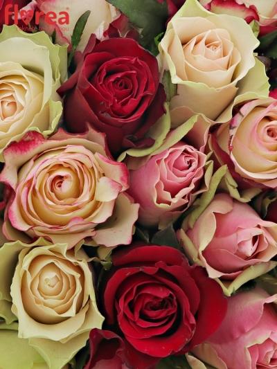 Kytice 25 míchaných růží EBIGALE 50cm