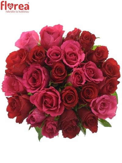 Kytice 25 míchaných růží GRACIANA 35cm