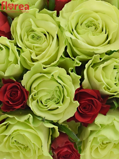 Kytice 25 míchaných růží GRAZYNA 35cm