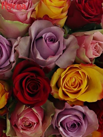 Kytice 25 míchaných růží MIRIAM 50cm