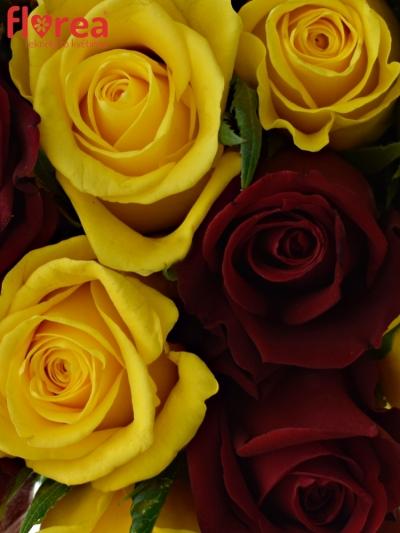Kytice 25 míchaných růží RED DELTA 50cm