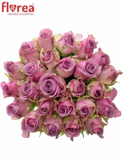 Kytice 25 modrofialových růží COOL WATER 50cm