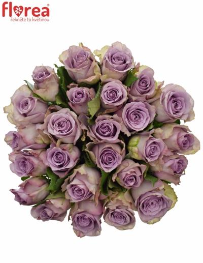 Kytice 25 modrofialových růží DANCING CLOUDS! 40cm