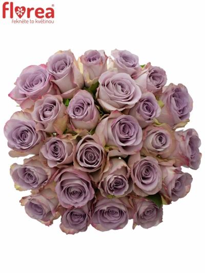 Kytice 25 modrofialových růží MEMORY LANE 40cm