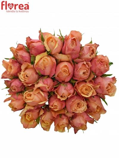 Kytice 25 oranžovočervených růží ALTAMODA 50cm