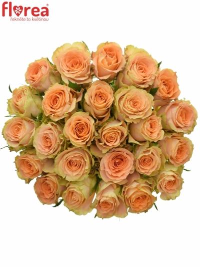 Kytice 25 oranžových růží FLORENTINE