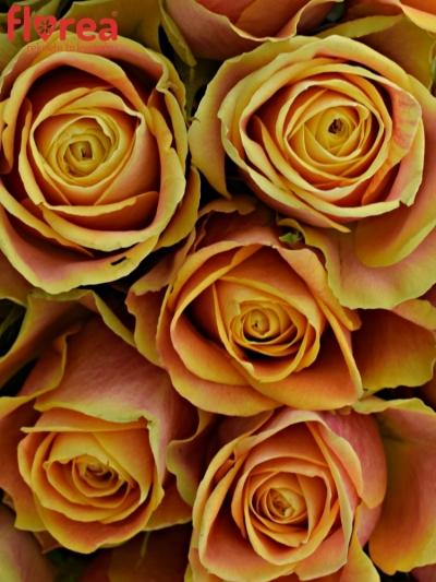 Kytice 25 oranžových růží MARACUJA 40cm