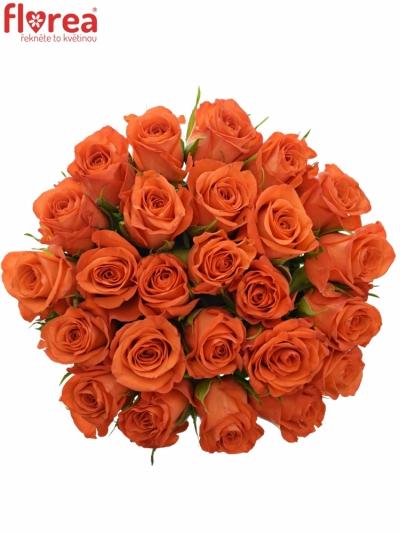 Kytice 25 oranžových růží PATZ 60cm