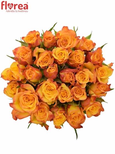 Kytice 25 oranžových růží TIEBREAK 60cm