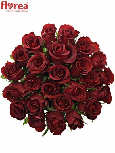Kytice 25 rudých růží BURGUNDY 50cm