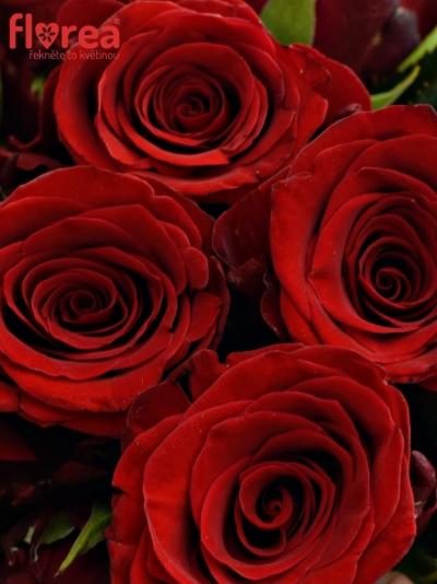 Kytice 25 rudých růží INCREDIBLE 60cm