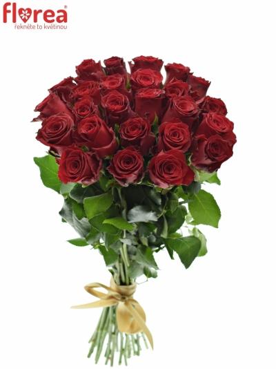 Kytice 25 rudých růží RHODOS 40cm