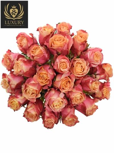 Kytice 25 růží 3D