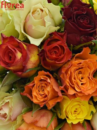 Kytice 25 růží MIX 60cm