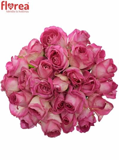 Kytice 25 růžových růží AVALANCHE CANDY+ 60cm