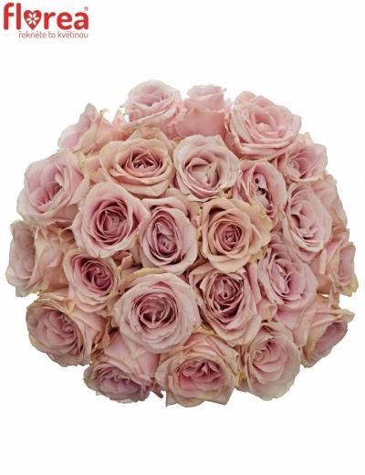 Kytice 25 růžových růží AVALANCHE PINK+ 50cm