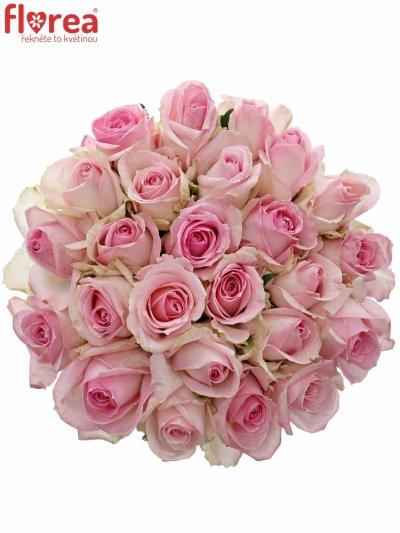 Kytice 25 růžových růží AVALANCHE SORBET+ 60cm