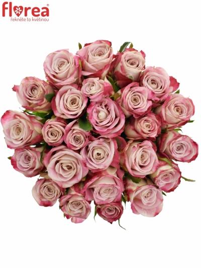 Kytice 25 růžových růží CLASSY ALISON