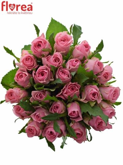 Kytice 25 růžových růží ELIZA 50cm