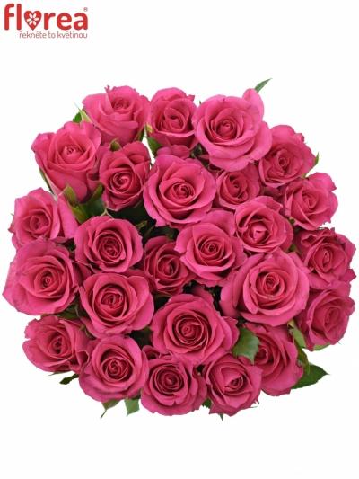 Kytice 25 růžových růží FRISBEE 60cm