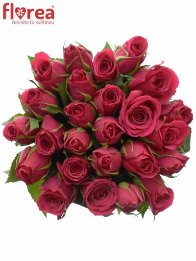 Kytice 25 růžových růží FUCHSIANA 60cm