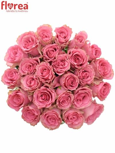 Kytice 25 růžových růží LOVELY RHODOS