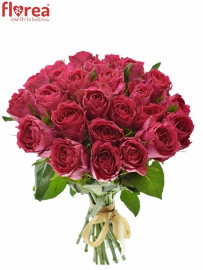 Kytice 25 růžových růží MADAM CERISE