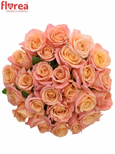 Kytice 25 růžových růží MISS PIGGY