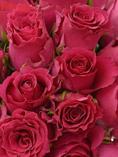Kytice 25 růžových růží Pink Rhodos 50cm