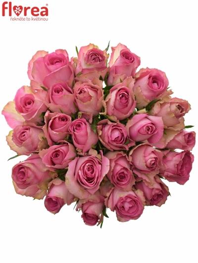 Kytice 25 růžových růží SUPREME+ 50cm