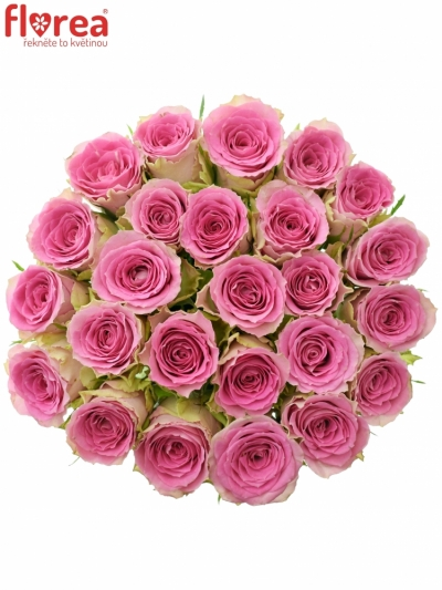 Kytice 25 růžových růží TIMES SQUARE