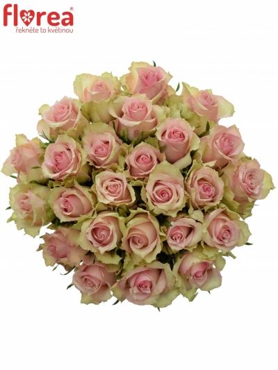 Kytice 25 smetanových růží DREAMLAND 60cm