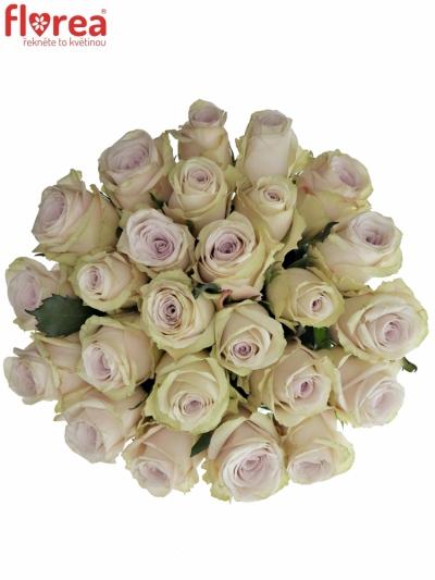 Kytice 25 světle fialových růží SILVERY FLAME 35cm