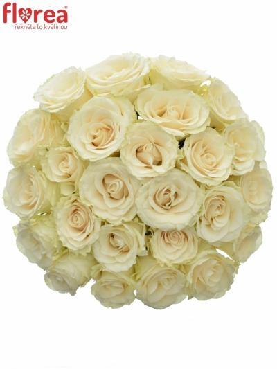 Kytice 25 světlekrémových růží SOLSY
