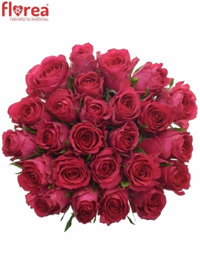 Kytice 25 vínových růží MADAM CERICE 40cm