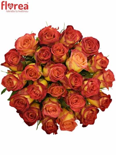 Kytice 25 žíhaných růží CATCH