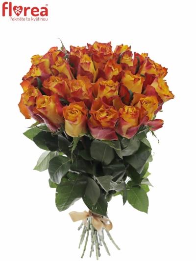Kytice 25 žíhaných růží DOWNTOWN!