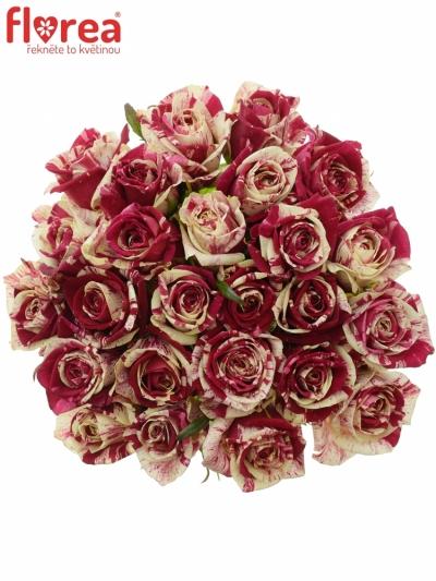 Kytice 25 žíhaných růží HARLEQUIN 50cm