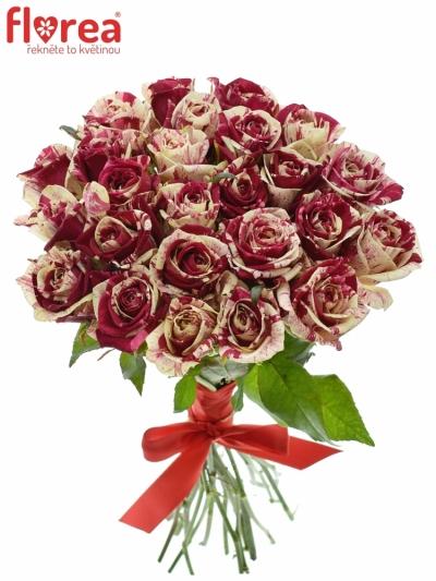 Kytice 25 žíhaných růží HARLEQUIN 40cm