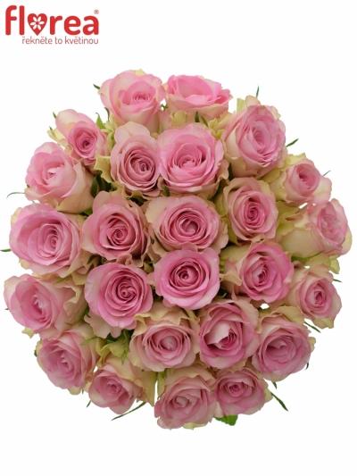 Kytice 25 žíhaných růží LOVELY JEWEL 50cm