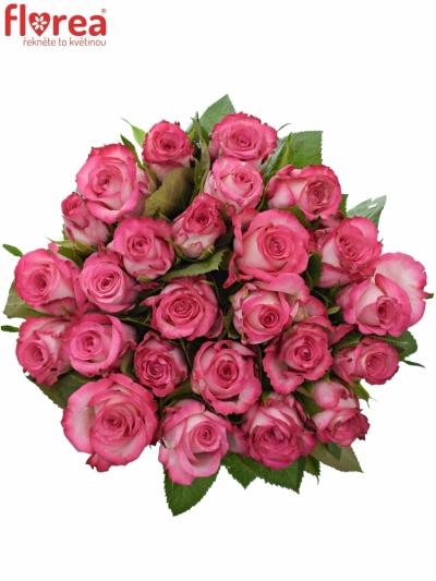Kytice 25 žíhaných růží N-JOY 50cm