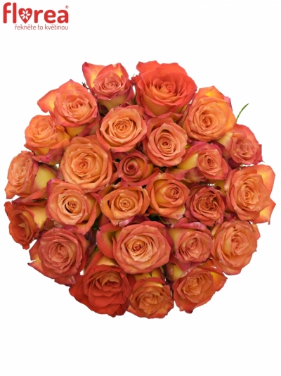 Kytice 25 žíhaných růží UTOPIA