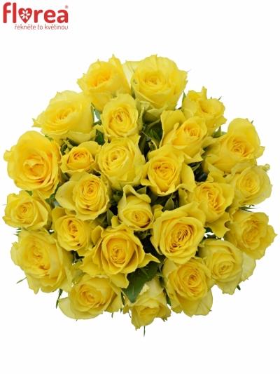 Kytice 25 žlutých růží GOLDEN TOWER 50 cm